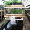 Octorara Contemplates Diving Into Aquaponics